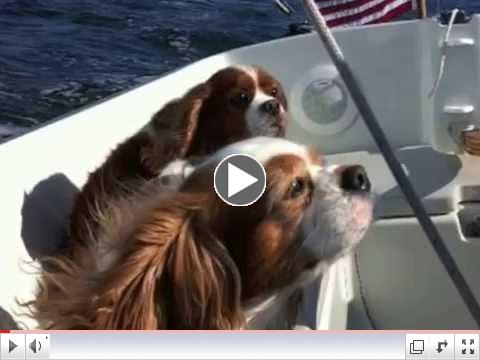 Dogs Sail into the Sunset
