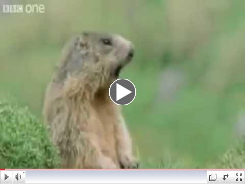Best Of Funny Talking Animals