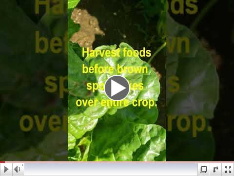 Green Thumb at 60 - Video #5 - Harvesting Foods