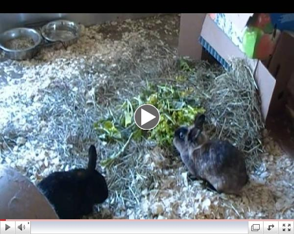 It's Bunday Monday at Critter Camp's free range Bunny Haven!
