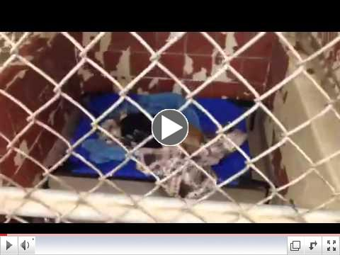Animal Rescue Aid Pet Beds at Dothan City Animal Shelter (AL) - Video 1