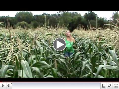 Sweet Corn Field Tour!