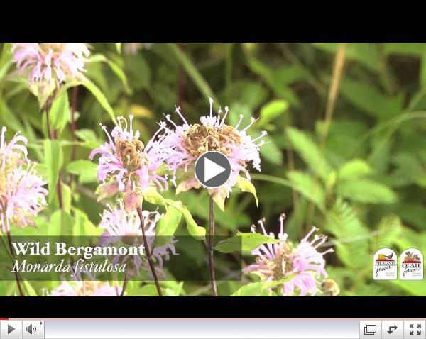 Top 10 Pollinator Plants