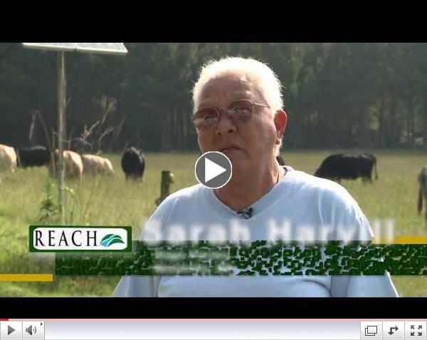 REACH - Sage Farms