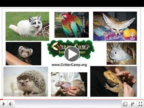 What is Critter Camp ?