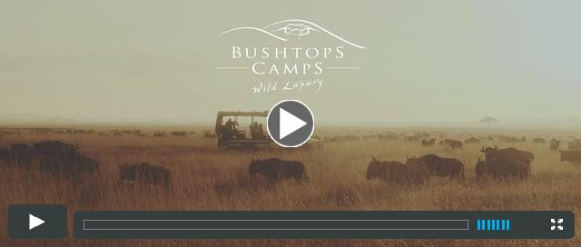 Watch the Roving Bushtops Video Here