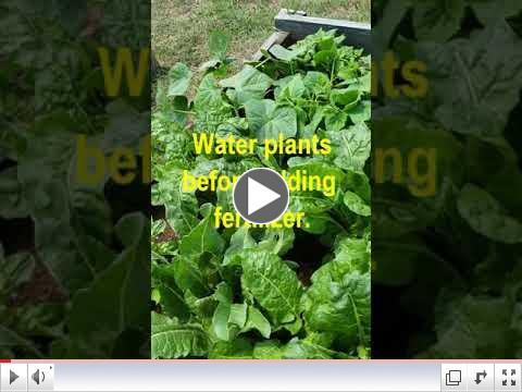 Green Thumb at 60 - Video #8 - Garden Watering 1 view