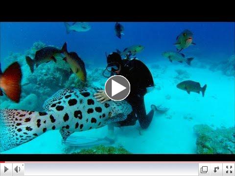 Trailer for Sharkwater