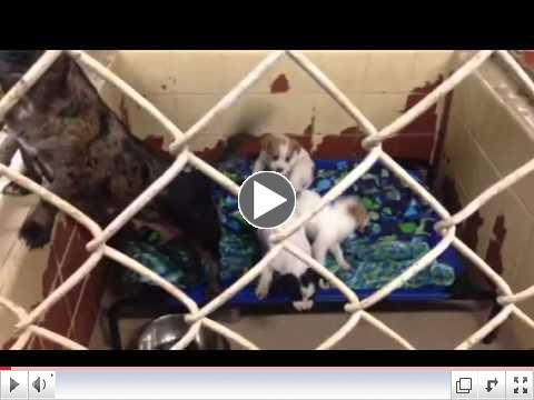 Animal Rescue Aid Pet Beds at Dothan City Animal Shelter (AL) - Video 2