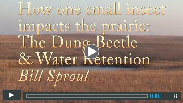 The Dung Beetle and Water Retention