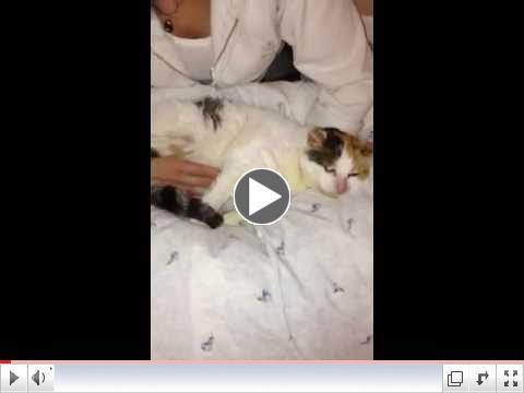 Clci the cat getting a massage