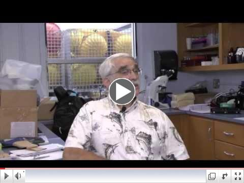 Dr. John Gold-TAMUCC