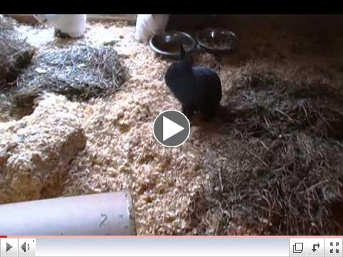 Lefty & Righty the rescued abused rabbits are now Free Range in Critter Camp's Bunny Haven