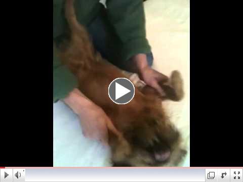 Massaging Tully