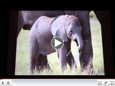 Oakland Zoo Celebrating Elephants with Cynthia Moss