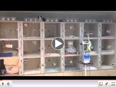 Cats Exclusive Veterinary Center Tour