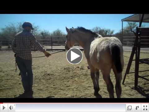 Foals in Training - ROTH reaches out at Equine Voices - Day 4 PM