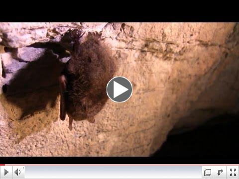 Importance of Bats to our Ecosystem and Agriculture
