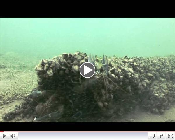 #19 - Rusty Crayfish