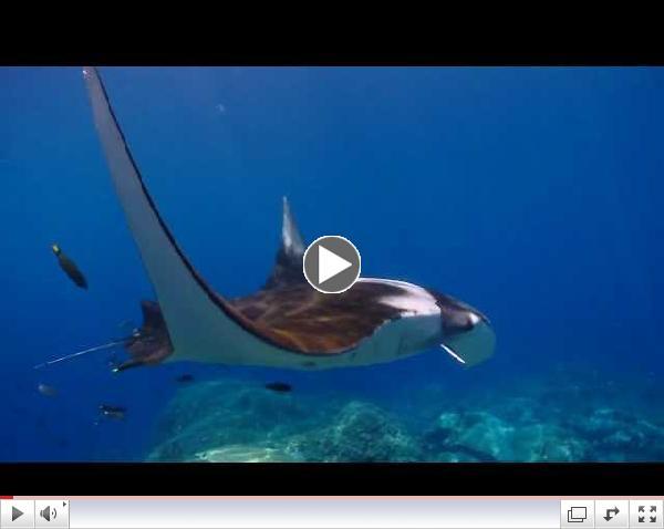Sir Richard Branson PSA - Protect Manta Rays