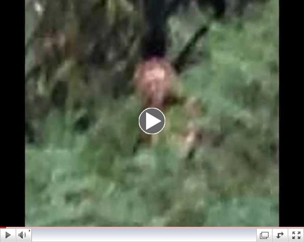 Woman Takes a Photo of a Sasquatch While Hiking!!