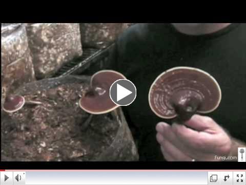 Paul Stamets with Reishi mushrooms in growroom