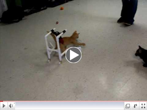 Cat Wheelchair:  Day 1 - Spectacular Play