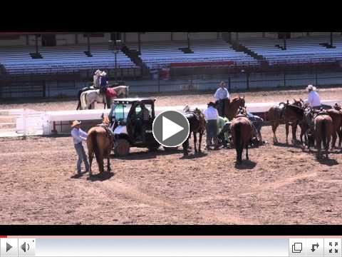 Steer Injured at 2012 Cheyenne Rodeo