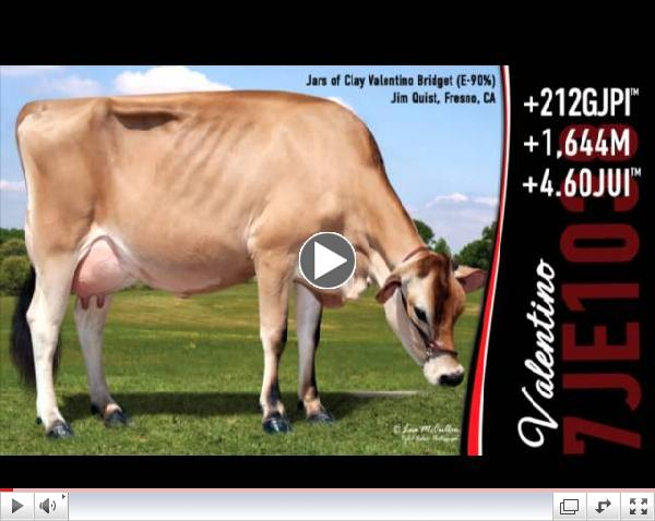Herby Lutz Sire Analyst Comments on 7JE1038 Valentino